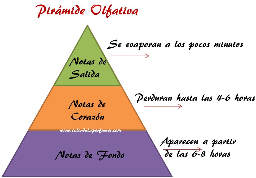 pirámide-olfativa